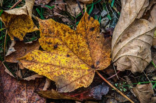 go earthy color palettes blog